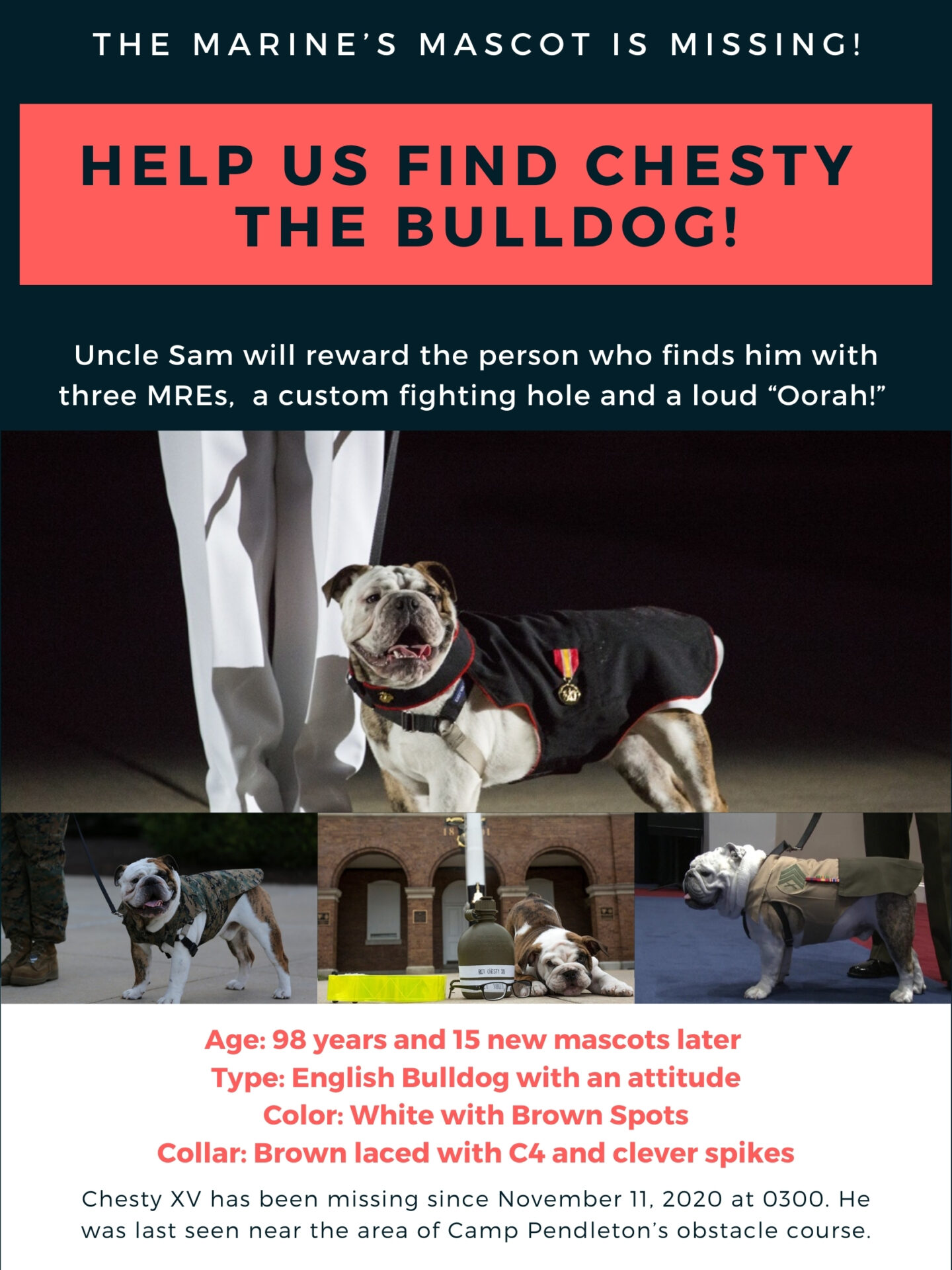 Chesty XV is the Marine Corps Mascot and has gone missing.